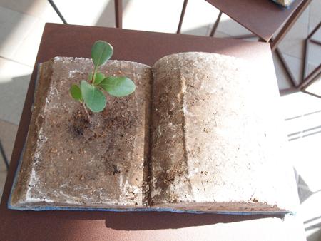 植物は世界と深く関わる